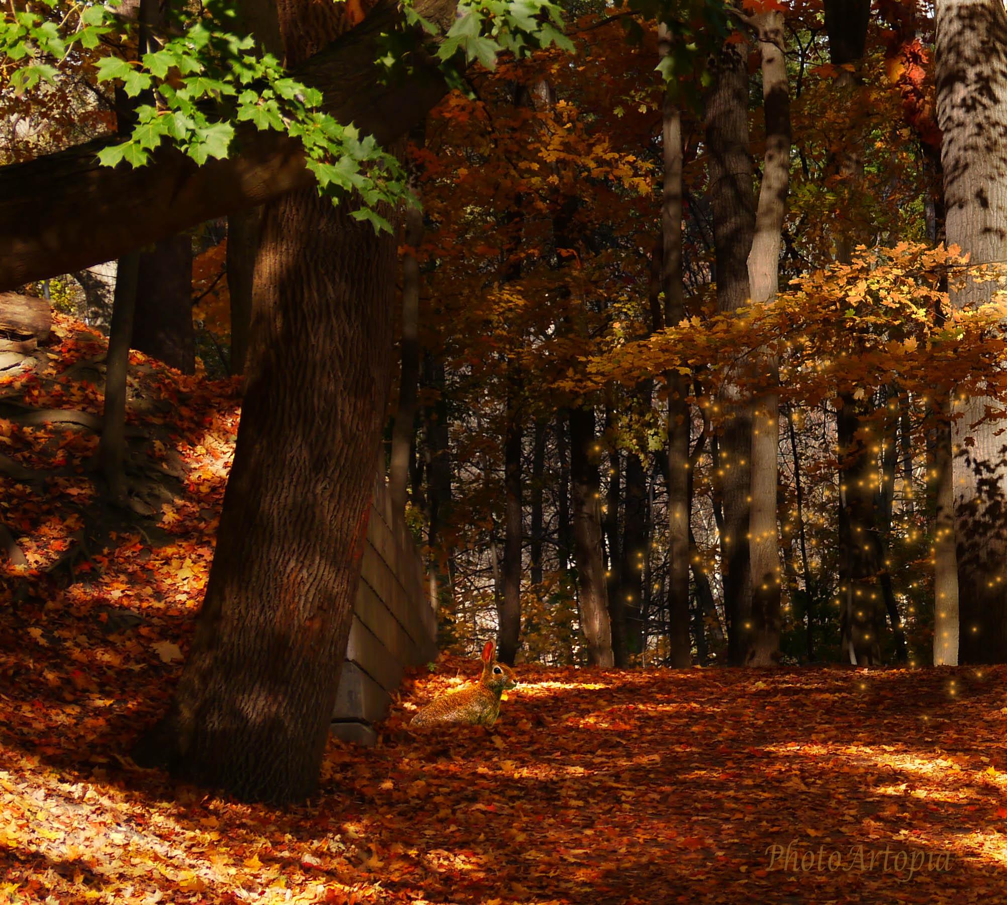 autumn070b