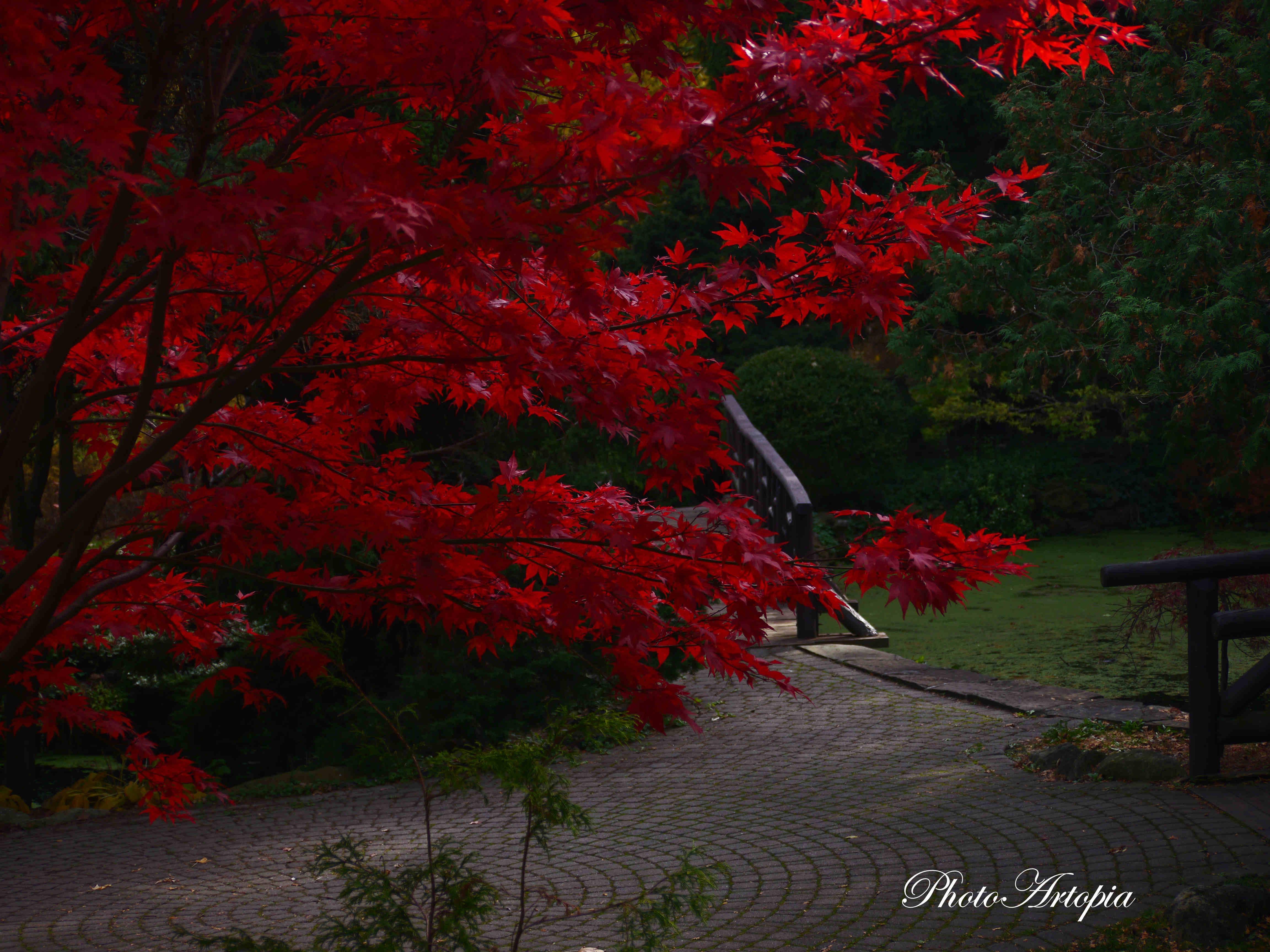 Autumn-Garden160