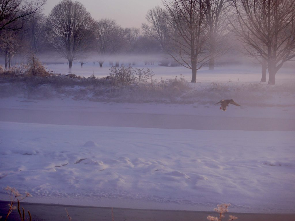 winterP1320594-1024x768