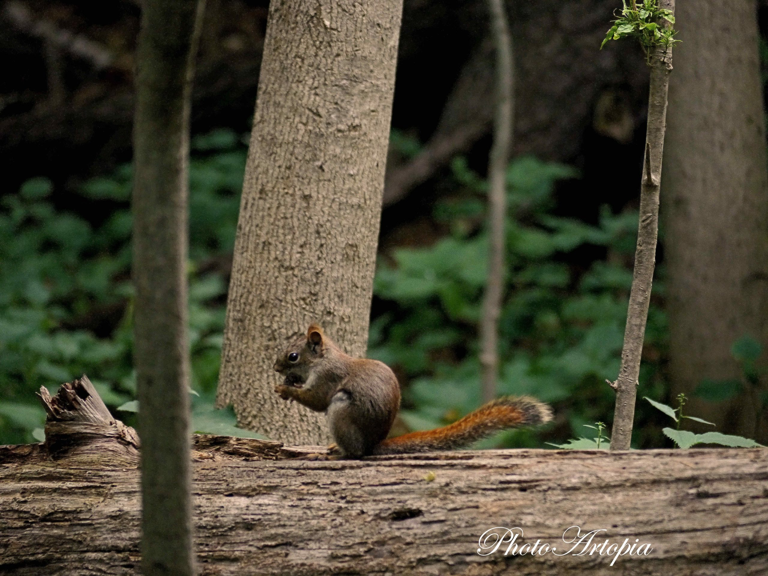 squirrel166